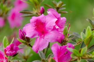 seger yah bunganya :)