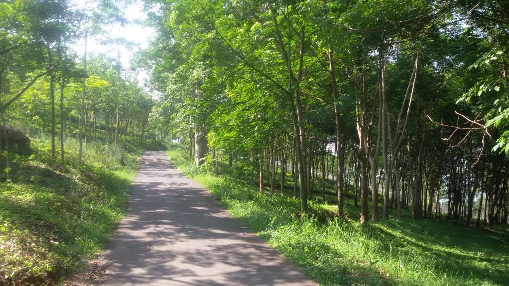 jalan menuju Goa Rong ijo royo2 .. asyik ya :)
