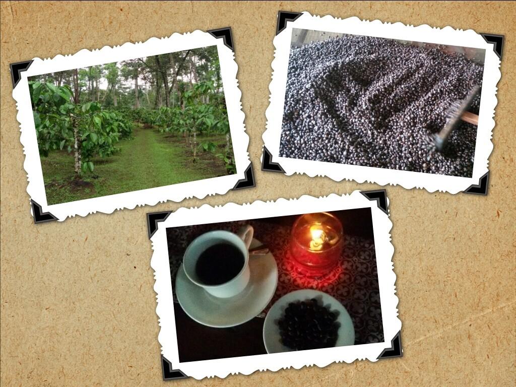 perjalanan panjang biji kopi, dari pohon hingga menjadi segelas kopi yg nikmat