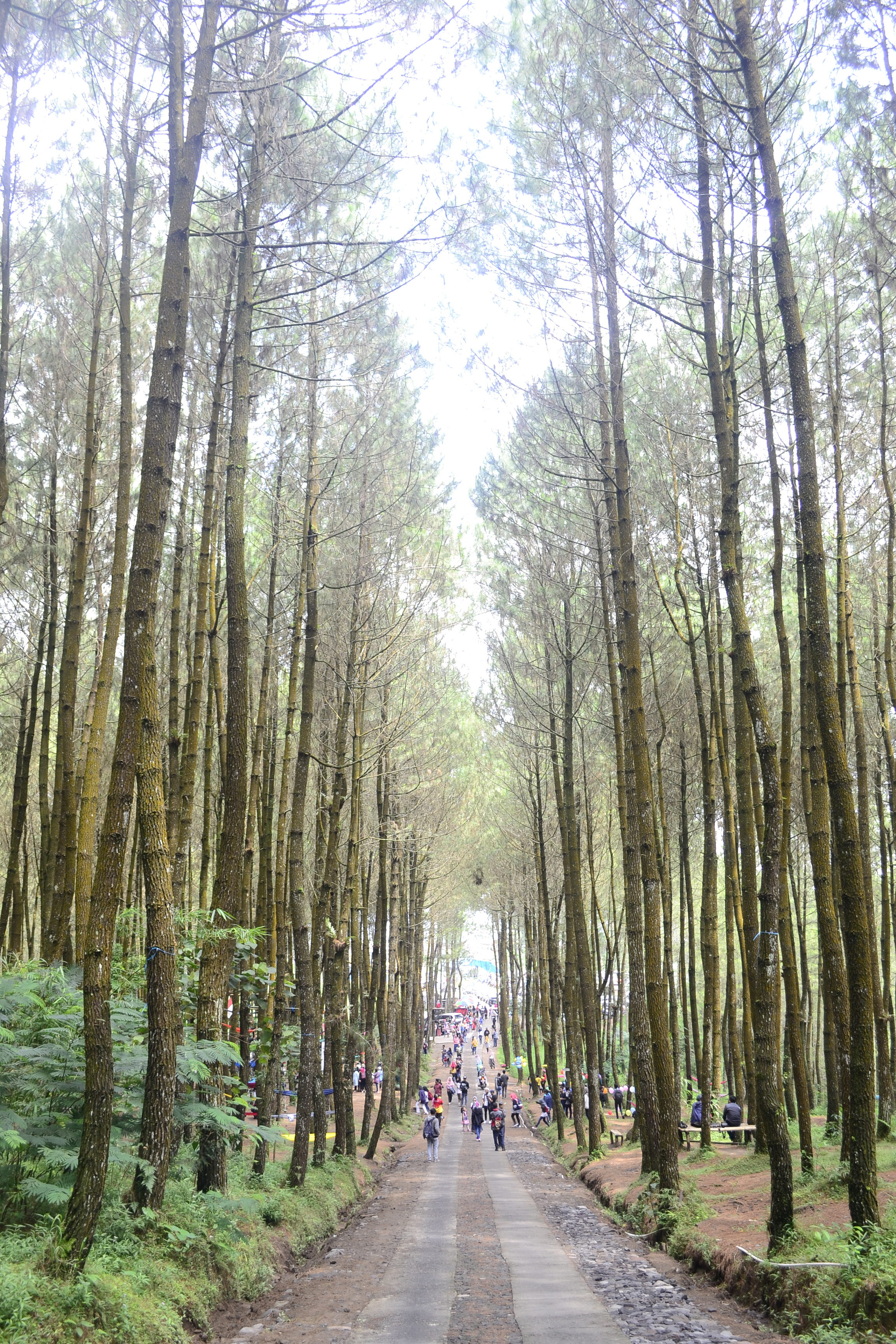 Wisata Kopeng Desa Sejuk Di Antara Gunung Merbabu Dan Telomoyo